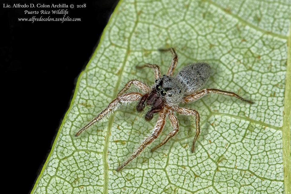Minnesota Seasons Minnesota Spiders