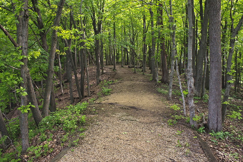 Beech Maple Forest ~ Great river bluffs state park