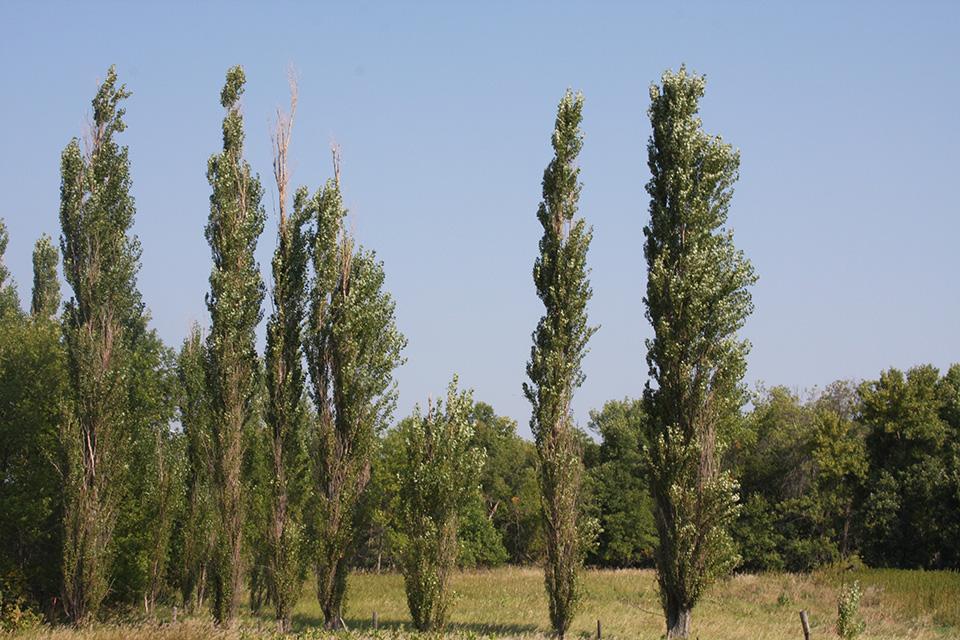 Hardwood trees list